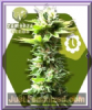 Zambeza Power Kush Auto Fem 10 Weed Seeds
